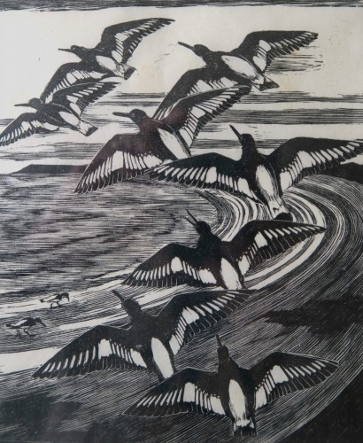 oyster-catchers